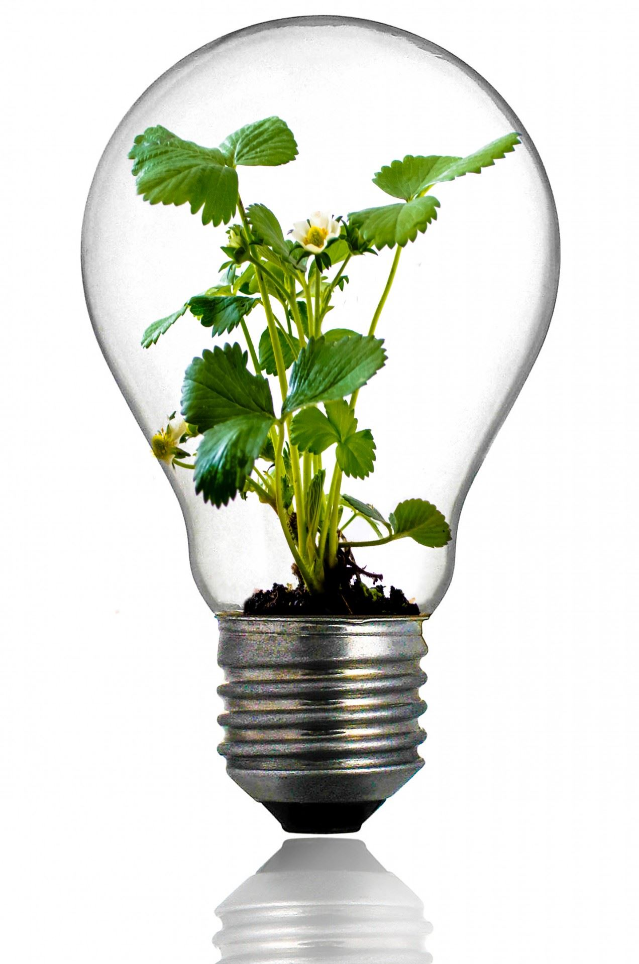 green-plant-in-the-light-bulb